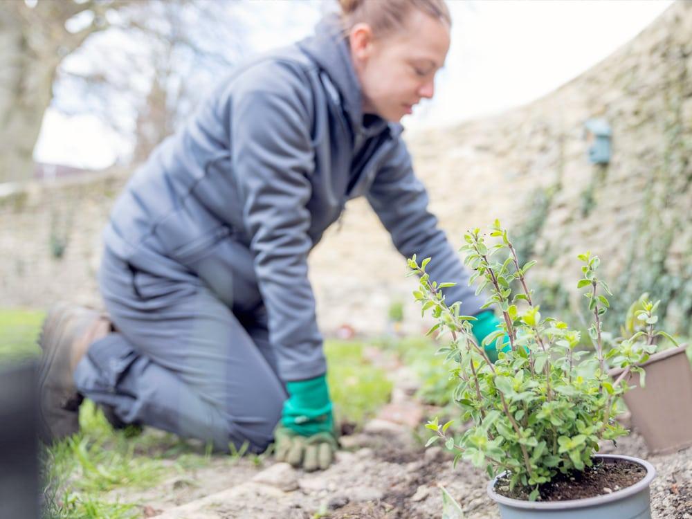 Garden therapy in Brackley